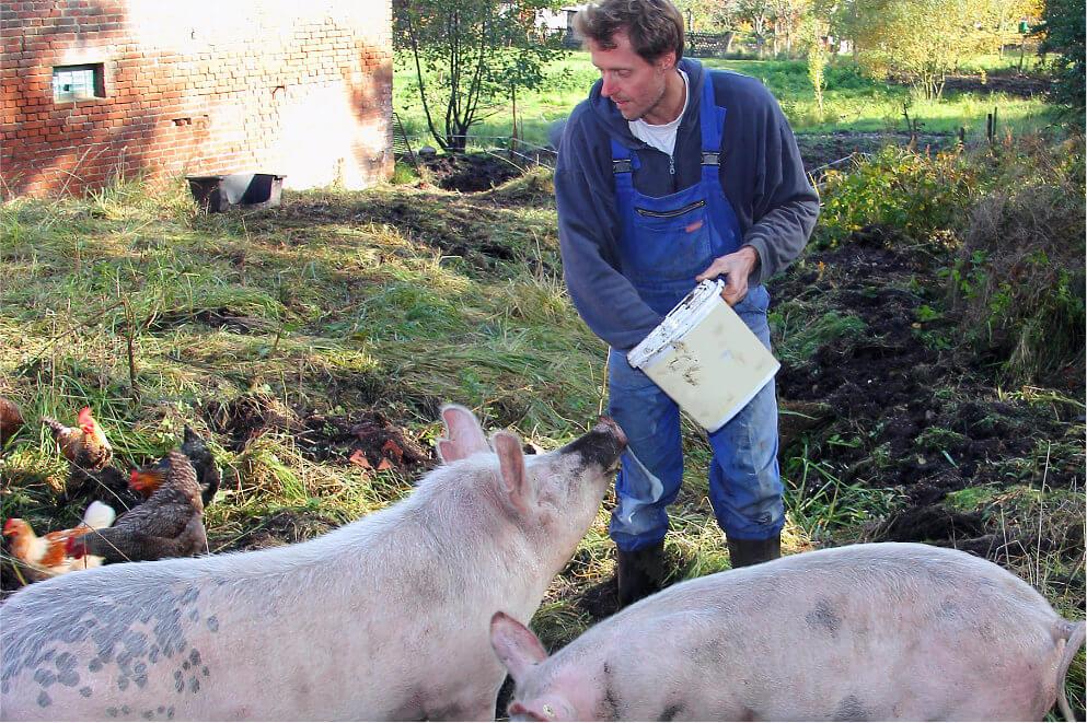 Farmář krmící prasata